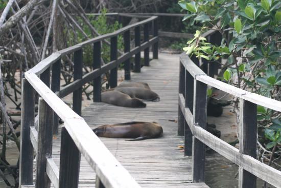 Puerto Villamil, Ecuador: Lobos marinos