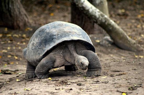 Puerto Villamil, Ecuador: Tortugas