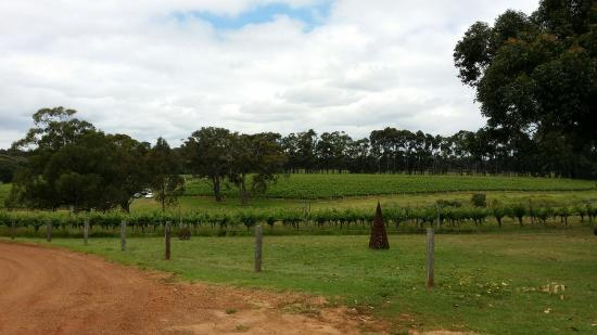 Hay Shed Hill Wines: 20151109_124400_large.jpg