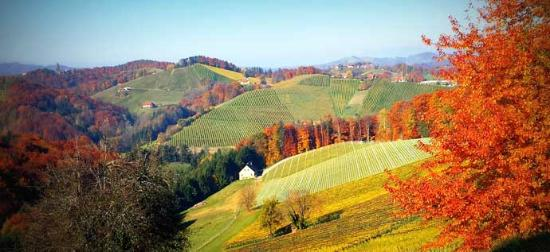 Gamlitz, ออสเตรีย: Das Südsteirische Weinland