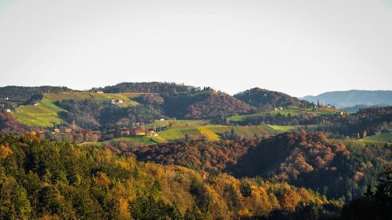 Gamlitz, ออสเตรีย: Blick zum Wurzenberg