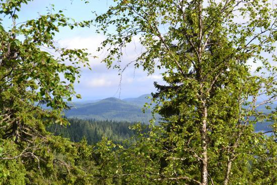 Kolinuuron kierros Nature Trail