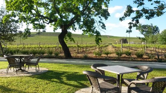 Wellington, Νότια Αφρική: Views from the pool area, surrounded by vineyards