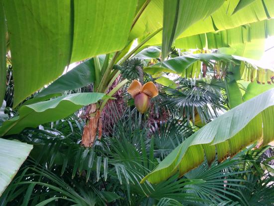 Hotel 4 Stagioni: Im Garten wachsen sogar Bananen