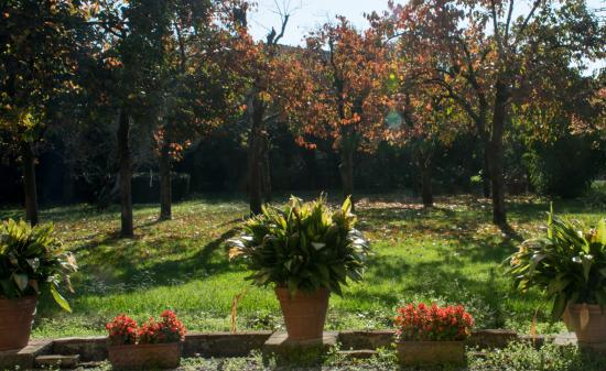 Villa La Chiusa : Giardino