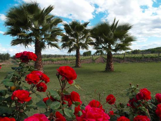 Posada Cavieres Wine Farm照片