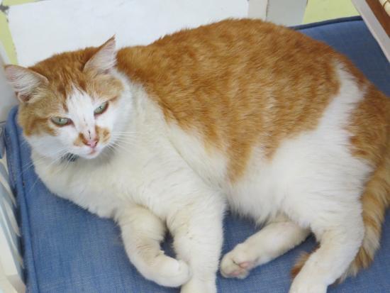 Marmalade Cat Cafe Darling