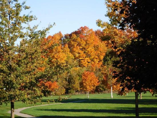 Jesse Davidson Park