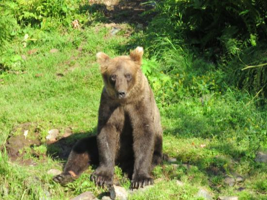Russell Fishing Company: Wolverine Creek Fly Inn Fishing, got to see the bears as a bonus