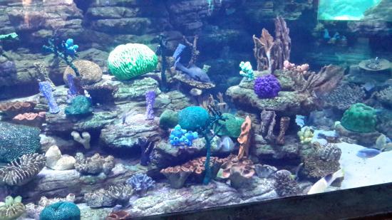 Under The Sea Picture Of Ushaka Sea World Aquarium