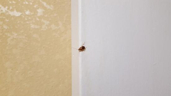 Baymont Inn & Suites Sevierville Pigeon Forge : Roach on bathroom door