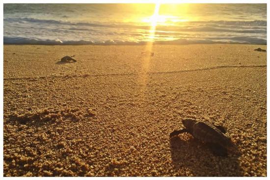 todos santos singles Todos santos, baja california sur,  south of todos beach access off of the baja blacktop can be garnered at many locations,  single day or multi-day adventures.