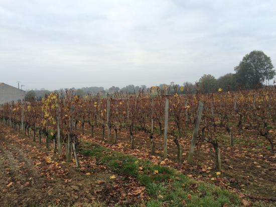 Nerigean, Francia: 葡萄畑