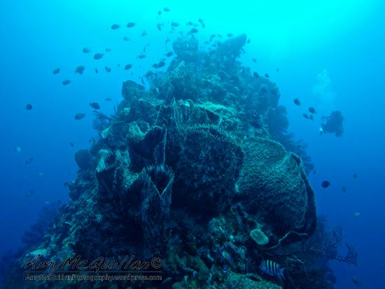 Scuba Steve's Diving Ltd.: The beautiful Pinnacles dive with Scuba Steve's