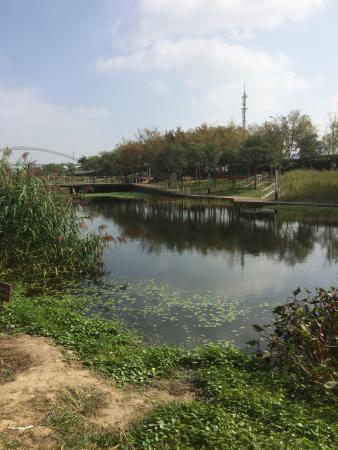 上海世博后滩湿地公园