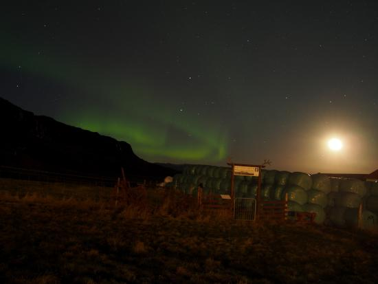 Hofn, Ισλανδία: northern lights put on quite the show on halloween