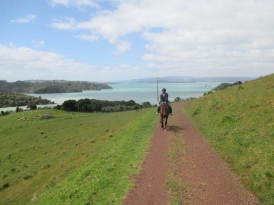 Waiheke-eiland, Nieuw-Zeeland: the way to top of the hill