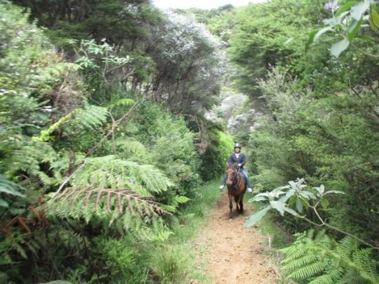 Waiheke-eiland, Nieuw-Zeeland: road in the forest