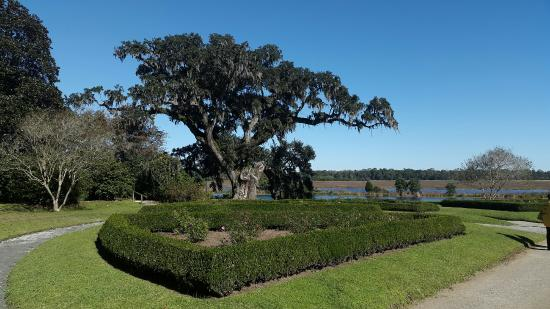 Middleton Place: View Of Gardens