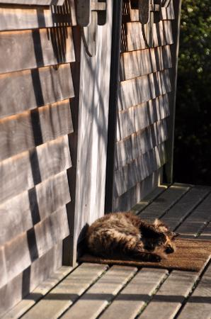 Te Tiro: Our house guest