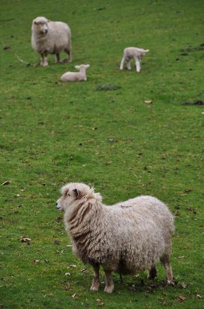 New Plymouth, Nueva Zelanda: Permanent residents at One Burgess