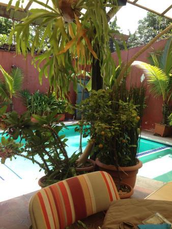 Morrison Hotel de la Escalon: back yard and pool