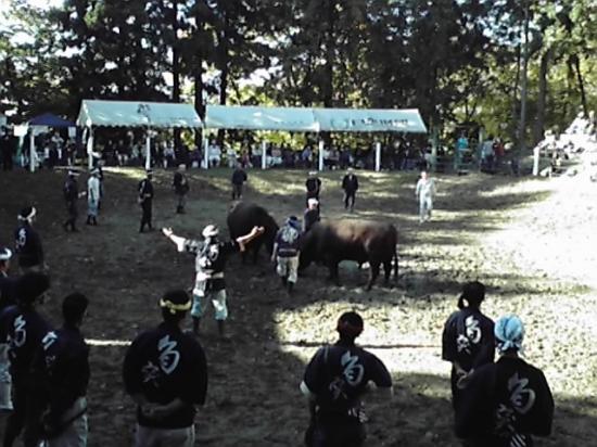 Нагаока, Япония: 闘牛の様子