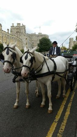 ‪Windsor Town Horse Drawn Carriages‬
