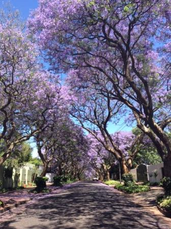 The Parkwood: Set in a pretty area with Jacarandas linng the streets