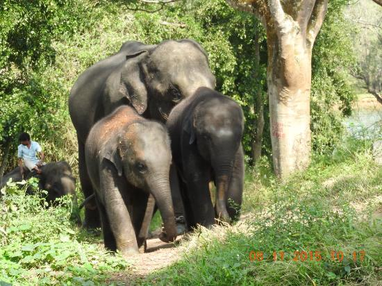 dubare elephant camp picture of dubare elephant camp coorg tripadvisor. Black Bedroom Furniture Sets. Home Design Ideas