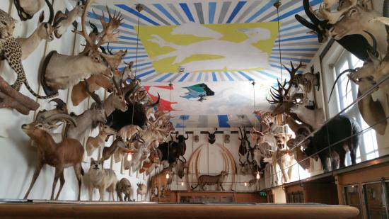 Animaux empaill s picture of musee de la chasse et de la for Jardin animaux paris