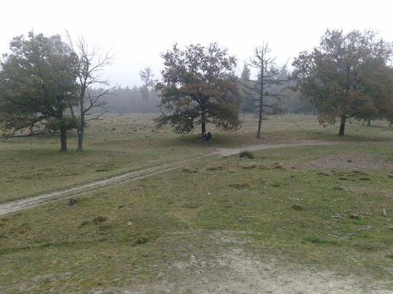 National Park Drents-Friese Wold: Ook mooi bij mist