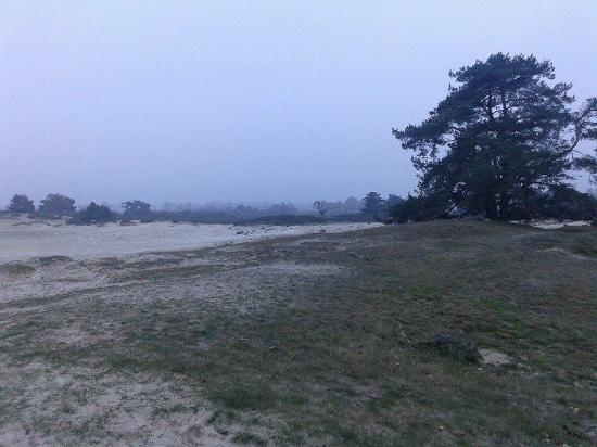 National Park Drents-Friese Wold: Mistig