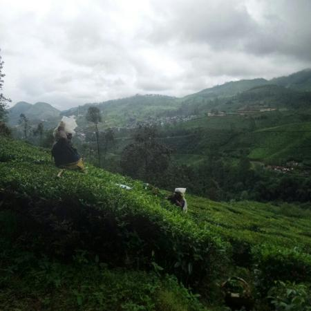 Devonshire Greens: Munnar Mountain