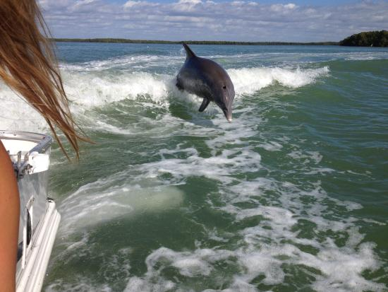 Outdoor Resorts of Chokoloskee: Dolphins play yards away