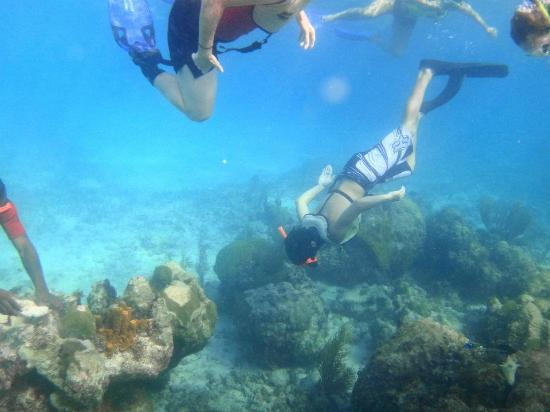 Catch the Wave Charters : Snorkeling!