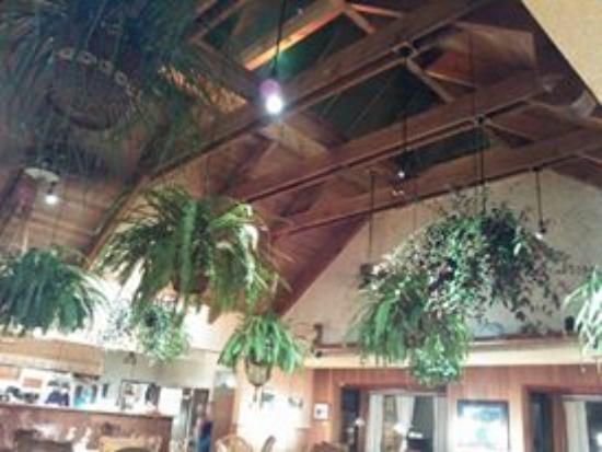 Alder Bistro & Lounge: Alder Bistro Plants