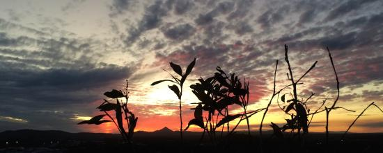 Coolum Beach, أستراليا: Vegetation & Sunset
