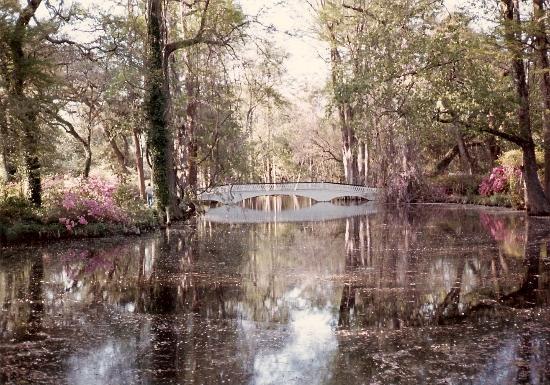 Long white bridge picture of magnolia plantation gardens charleston tripadvisor for Magnolia gardens charleston sc