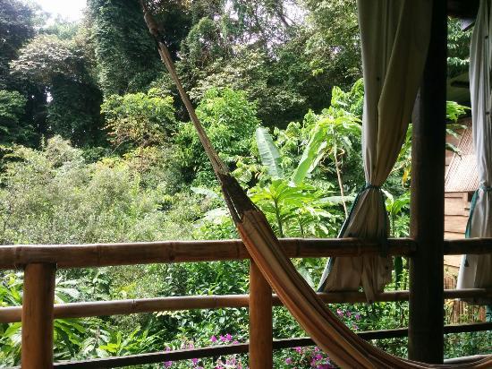 La Loma Jungle Lodge and Chocolate Farm: IMG_20151121_112802_large.jpg