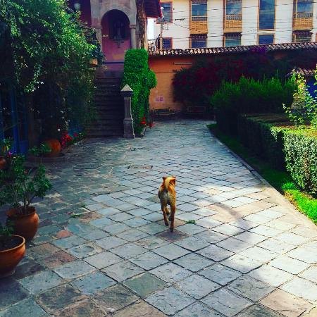 La Casona de San Jeronimo - Hotel Boutique: Conan the Hotel Dog and the entrance to the garden