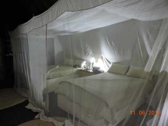 Tafika Camp: mosquito nets at night