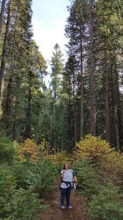 Arnold, CA: 20151122_142226_large.jpg