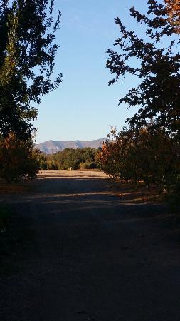 Santa Ynez Wine Trail: 20151122_160514_large.jpg