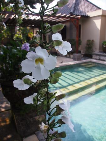 Photo of Barong Resort and Spa Ubud