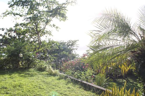 The Tamarind Tree Resort: untrimmed greens in the area
