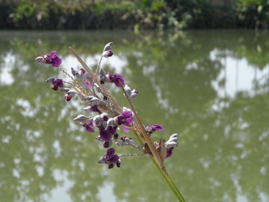 Teak Tree Lake: Beautiful flowers