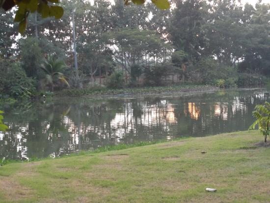 Teak Tree Lake: Lake