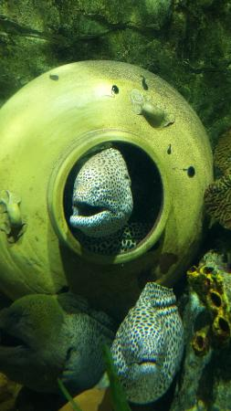 majestic - Picture of Vinpearl Aquarium - Times City, Hanoi ...