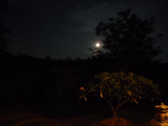 Teak Tree Lake: Night view